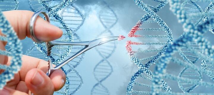 Durchbruch: Forscher reparieren Gendefekt bei menschlichem Embryo