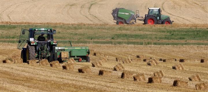 Bauernverband: Ernte 2021 fällt erneut enttäuschend aus