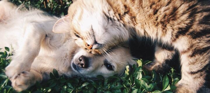 Tierkrankenversicherung – Warum die Policen für Haustiere Sinn machen