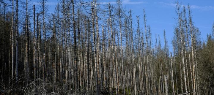 Waldzustandsbericht 2020: Nur 21 Prozent der Bäume sind gesund